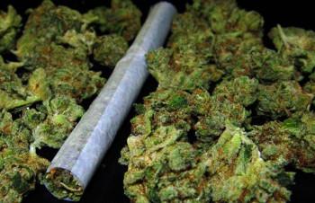Marihuana pronađena u Gacku i Bileći