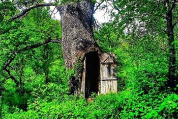 Tajna u hrastovom drvetu: Neobična crkva na jugu Srbije