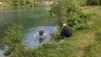 Порибљавањена  Горичког језера и ријеке Сушице