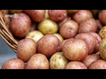 Nevesinje: Brendiranjem krompira do veće cijene i lakšeg plasmana (VIDEO)