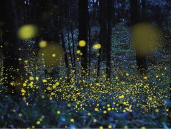 Tiha apokalipsa: Svici više ne svijetle, 'ugasili' su ih ljudi