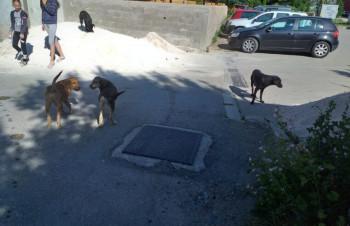 Gacko: Građani od nadležnih traže rješenje za pse lutalice