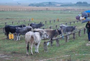 Zemljoradnička zadruga 'Gacko' - spona između Ministarstva i poljoprivrednih proizvođača