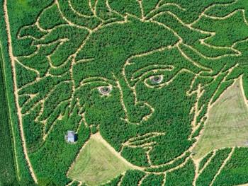 Njemački farmeri napravili portret Betovena na polju suncokreta