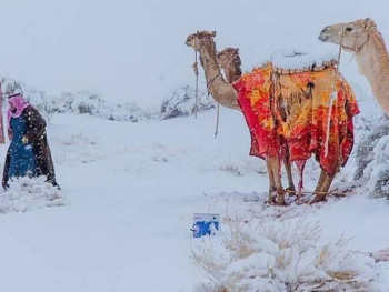 Poslije pola vijeka snijeg prekrio pustinju, kamile se smrzavaju