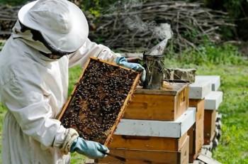 Loša godina za trebinjske pčelare – cijena meda 20 KM (AUDIO)