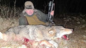 У Невесињу током комерцијалног лова одстријељен вук капиталац