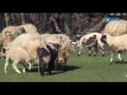 Zemljom Hercegovom: Trnovica (VIDEO)