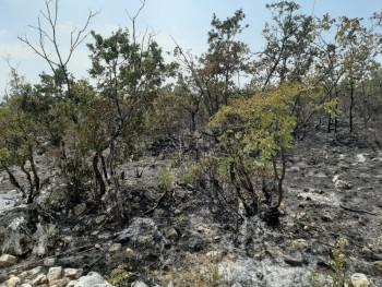 Požar uz magistralu Bileća – Gacko