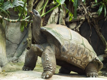 Uginuo najstariji stanovnik zoo-vrta Šenbrun (VIDEO)