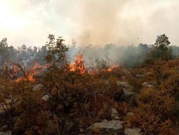 Bileća: Vatrogasci odbijaju vatru od kuća