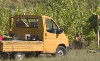 Hercegovački vinogradari spremni za berbu (VIDEO)
