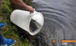 Poribljavanje trebinjskih voda