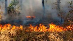 Požar u Trebinjskoj šumi