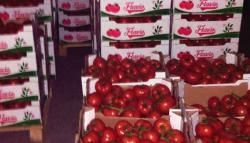 Carinici BiH oduzeli više od tonu paradajza u Trebinju