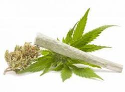 ЦЈБ: Пронађено око 500 гр. марихуане