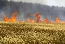 Под контролом пожар у мјесту Липник код Гацка
