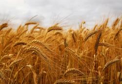Уплаћено 2,27 милиона КМ подстицаја пољопривредницима