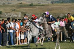 Невесиње: Коњске трке - Пријаве и пропозиције