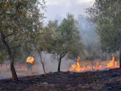 Сви пожари у Црној Гори под контролом