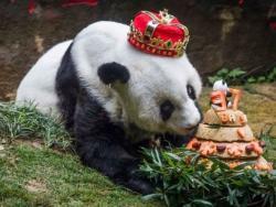 У Кини угинула најстарија панда на свијету